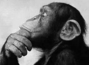 mono_pensando